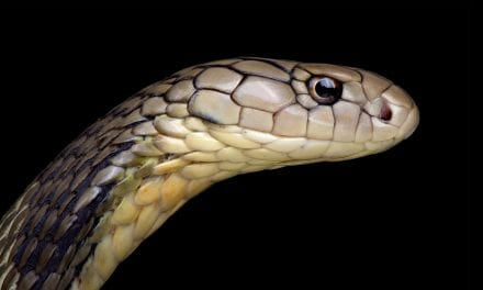 Snakes May Be Source of China Coronavirus