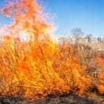 Smoke, Air Pollution Concerns Mount as Australia Wildfires Continue