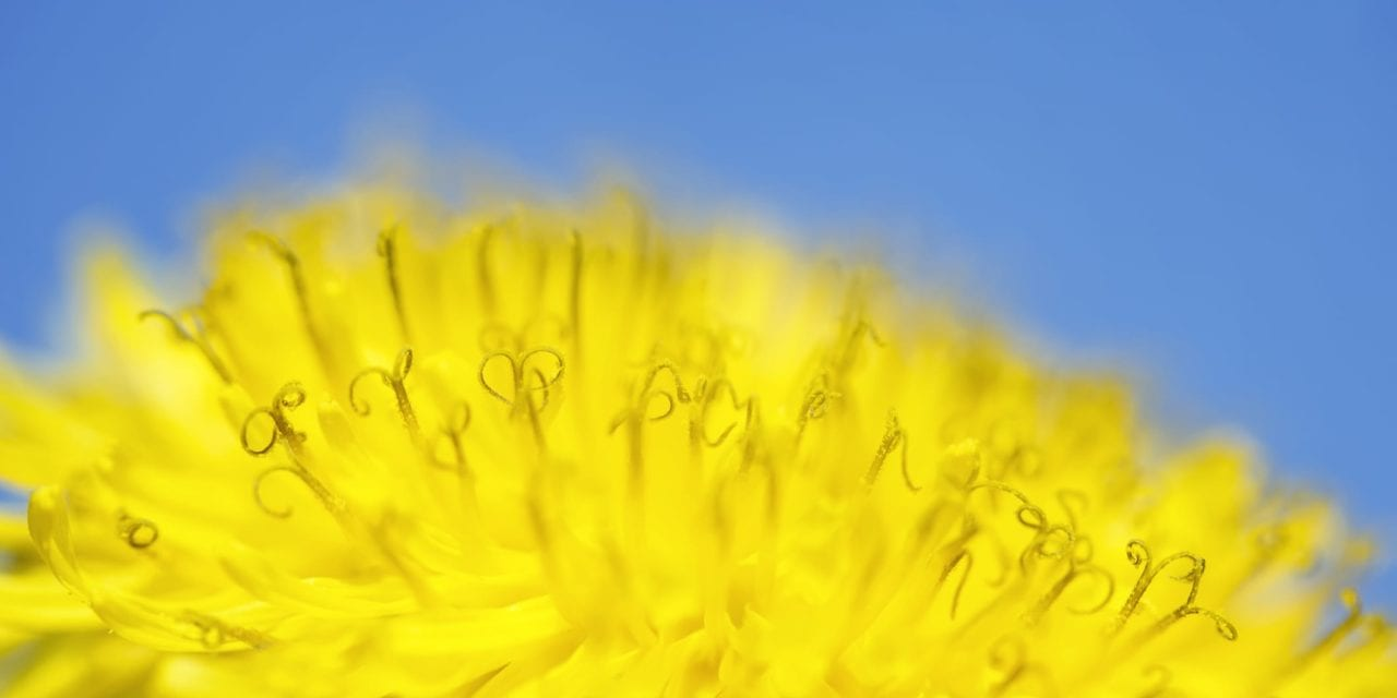 Scientists Explore New Pathways to Search for Better Allergy Therapies