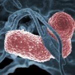 'Phage' therapy Effective Against Multidrug-resistant K. Pneumoniae