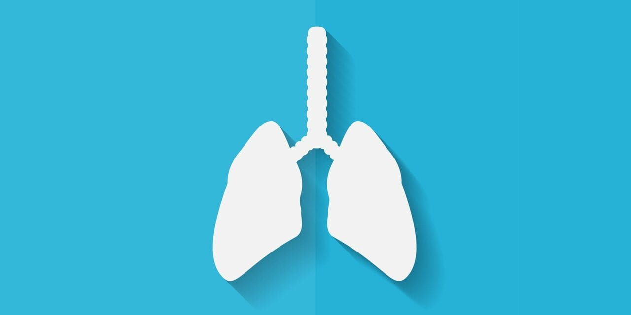 A New Model of the Human Lung