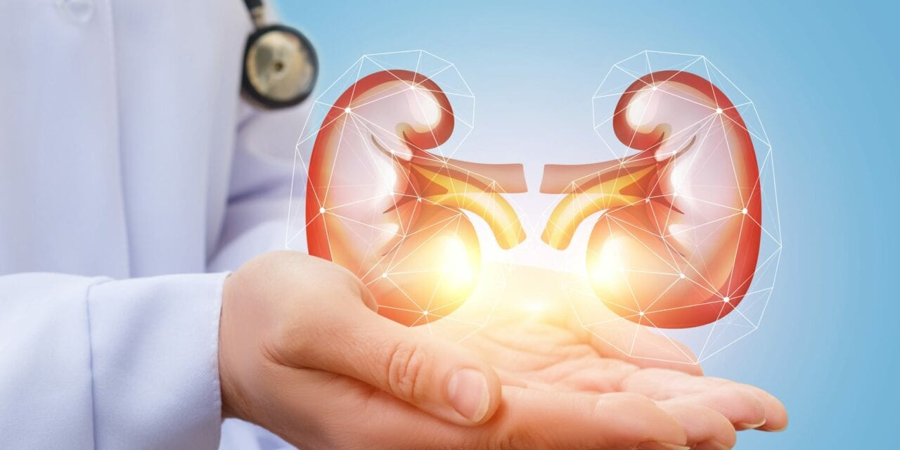 Study: New Protein Neutralizes COVID in Tiny Human Kidney
