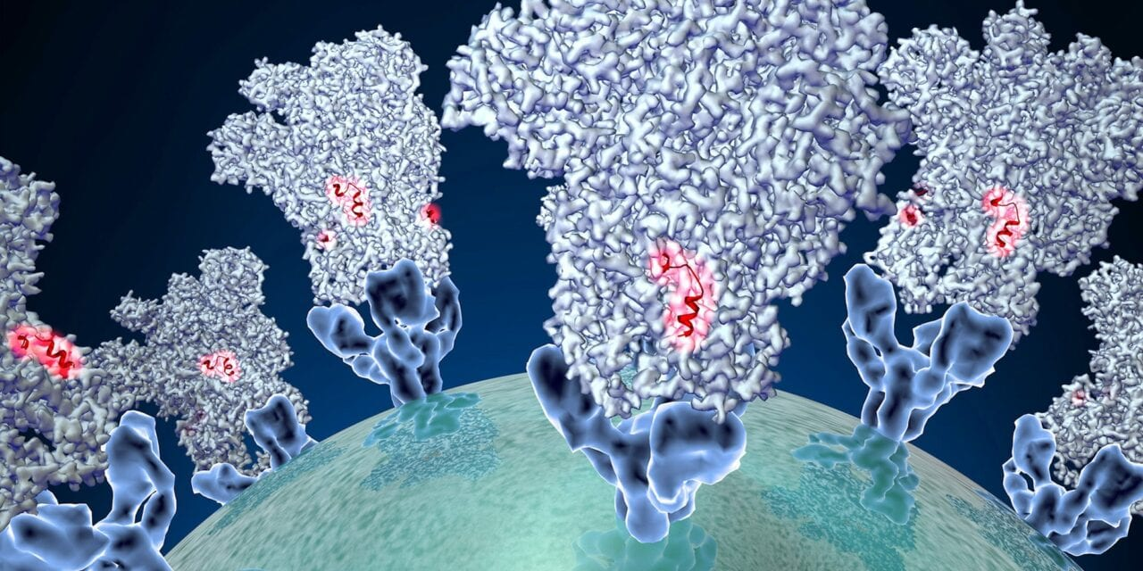 SARS-CoV-2 Infections May Trigger Antibody Responses Against Multiple Virus Proteins